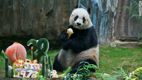 Jia Jia was the world's oldest panda in captivity.