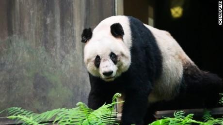 Jia Jia came to Hong Kong in 1999.