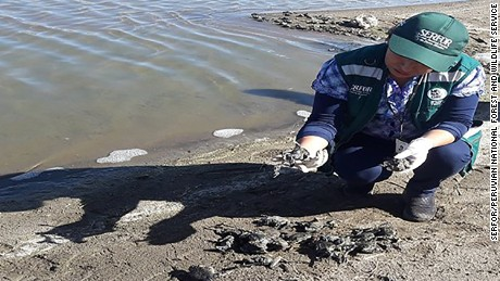 Peruvian environmental authorities are investigating the deaths of more than 10,000 giant frogs on Lake Titicaca in the South of the country on the border with Bolivia.