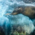 06 Wildlife Photographer of the Year 2016 RESTRICTED