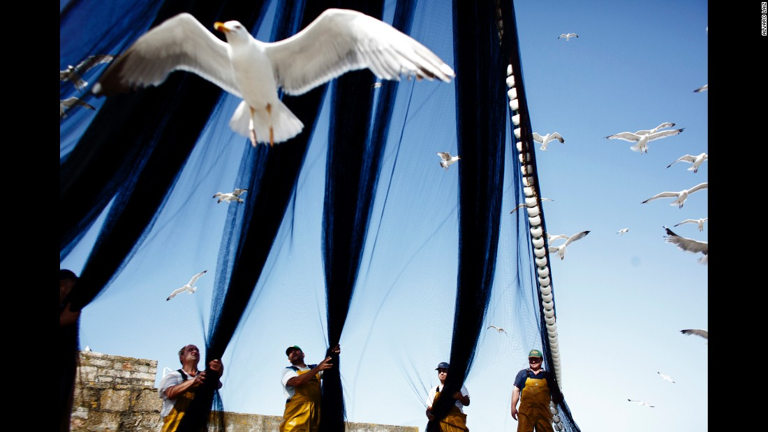 Fishermen untangle a trawling net while seagulls fight for fish.
