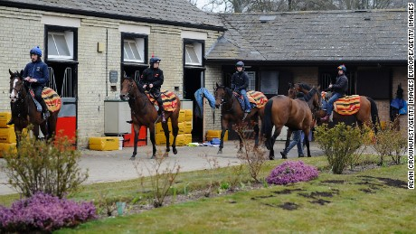 NEWMARKET, ENGLAND - APRIL 10: Horses return from the gallops to William Haggas' Somerville Lodge stables on April 10, 2013 in Newmarket, England. (Photo by Alan Crowhurst/Getty Images)