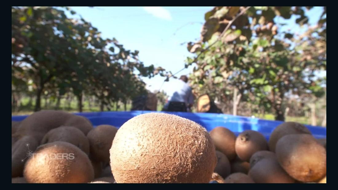 Your kiwi fruit's long journey