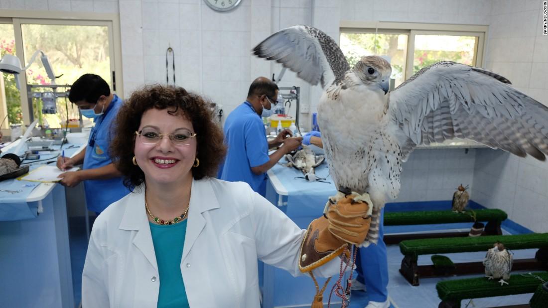 Inside the world's biggest falcon hospital