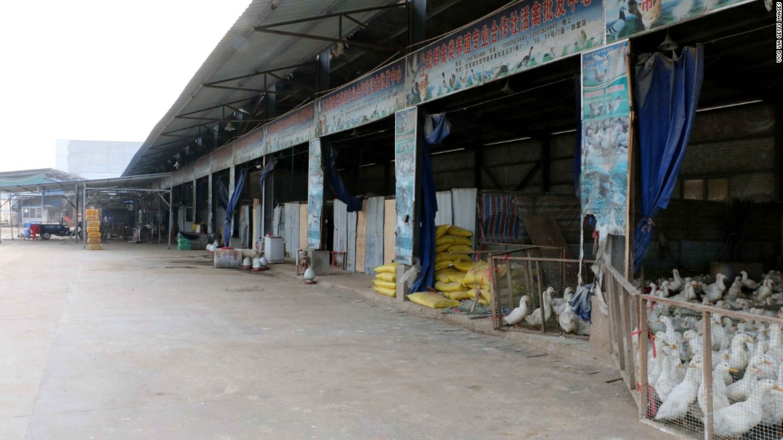 Poultry markets closed to stop avian flu