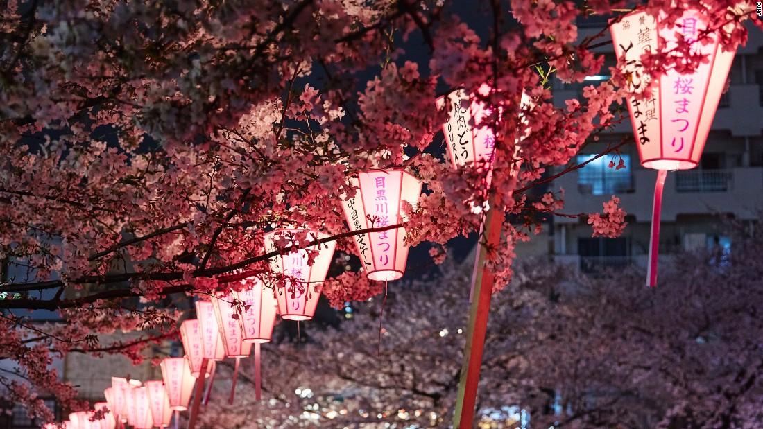Sakura season: Where to view cherry blossoms in Japan