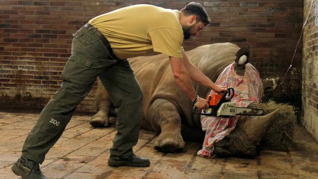 Czech zoo cuts off horns to protect rhinos after France attack