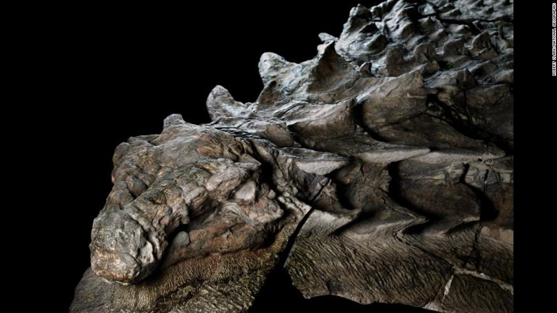 Shockingly lifelike dinosaur fossil unveiled