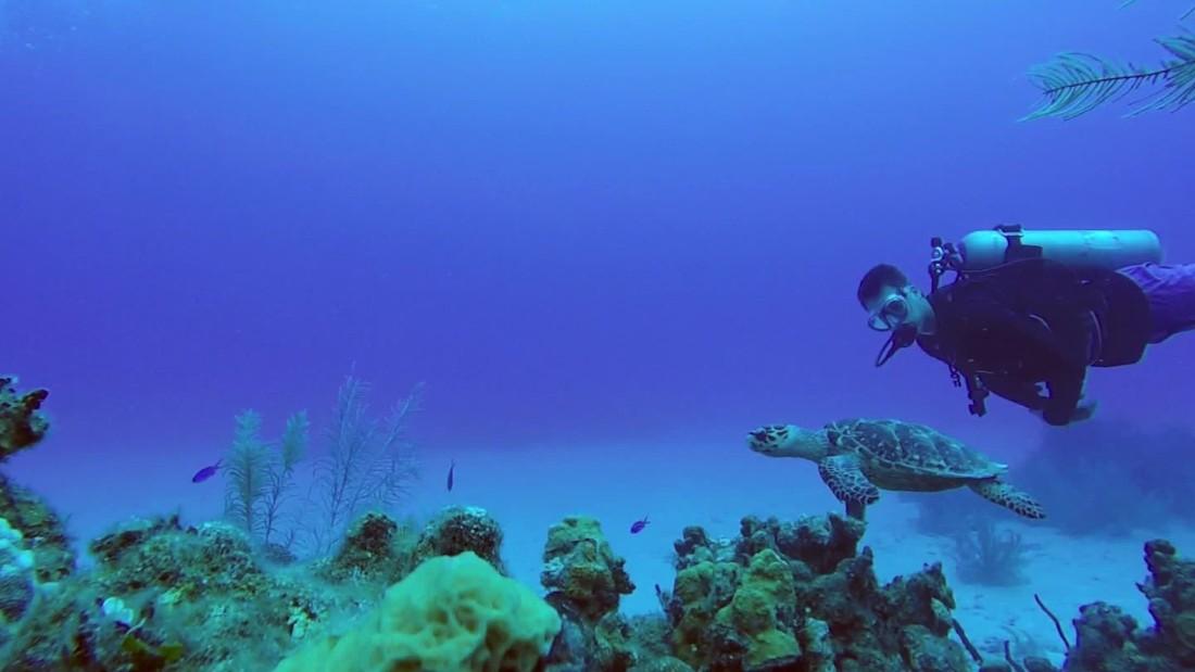 Escape to the Grand Cayman!