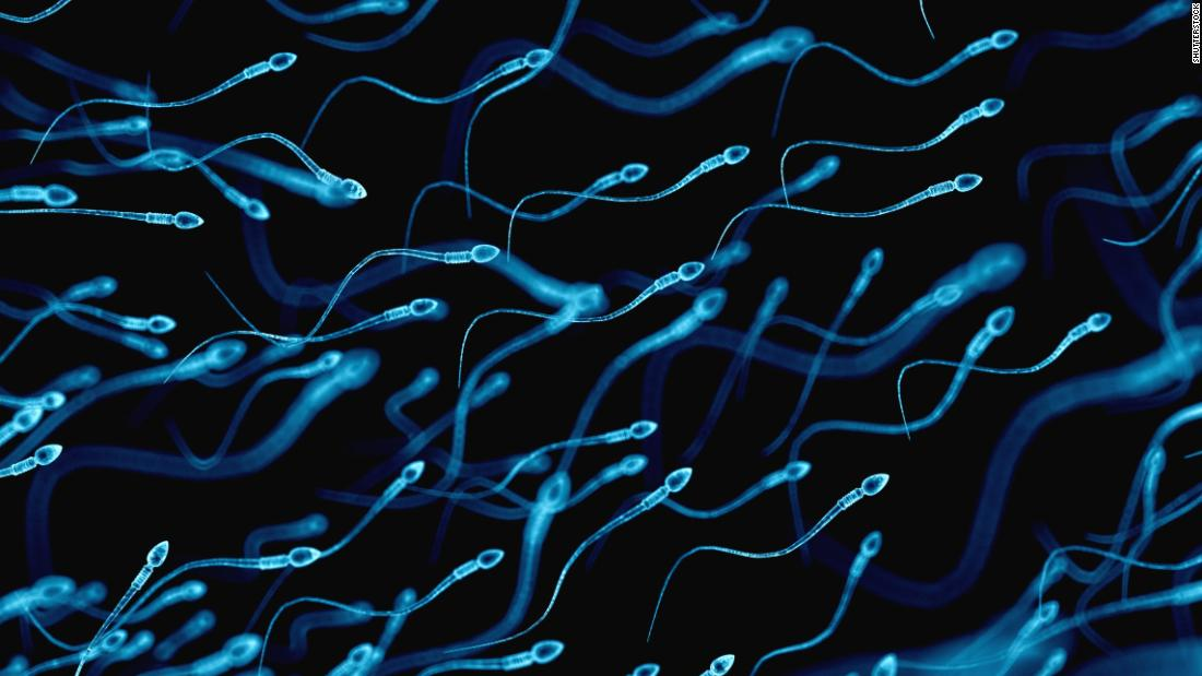 Sperm counts of Western men plummeting