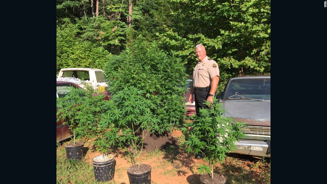 Police find 39 marijuana plants on man's property