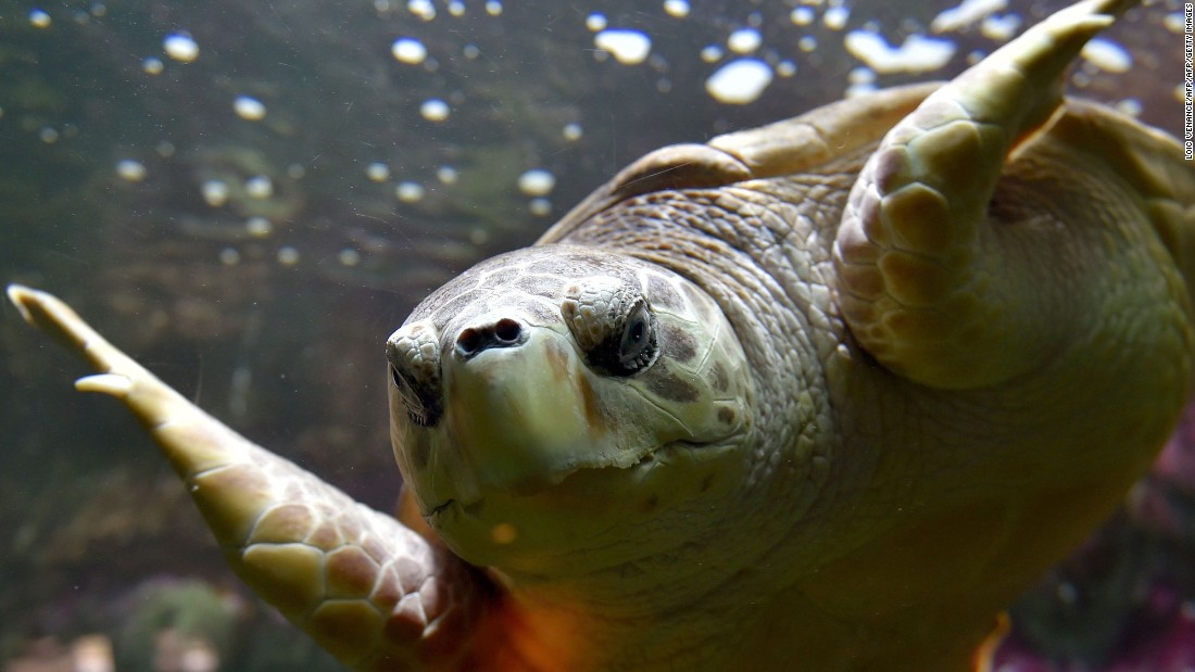 Could rare sea turtles return to China's Hainan Island?