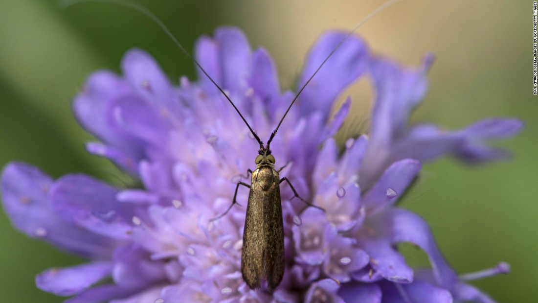Study: Insect populations down by 75%