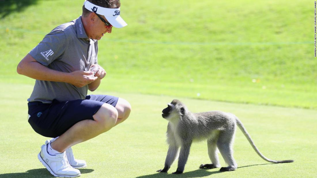 Ian Poulter monkeys around in South Africa
