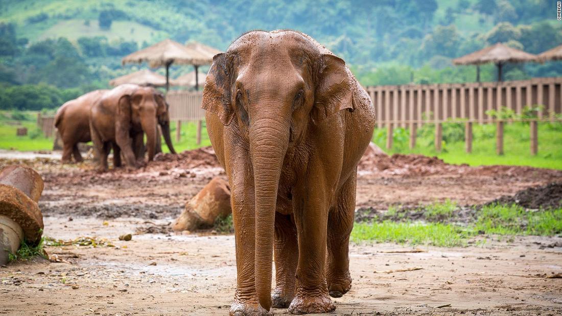 Inside Chiang Mai's most responsible elephant sanctuary