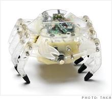 crab.03.jpg