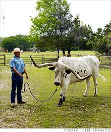 longhorn_steer.03.jpg