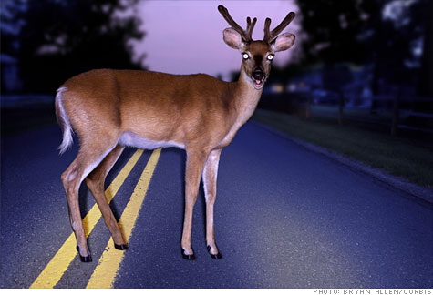 deer_headlights.co.top.jpg