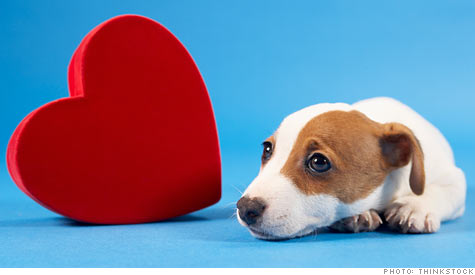 dog_valentine.ju.top.jpg