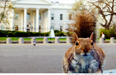 Squirrels bring Senate to a halt