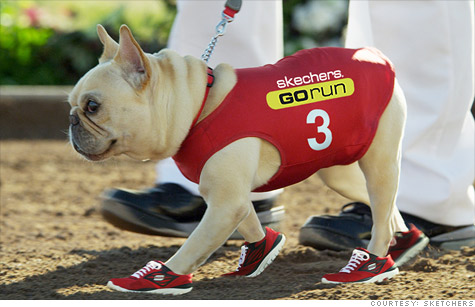Mr. Quiggly the French bulldog will co-star with Mark Cuban in Skechers' upcoming Super Bowl ad.