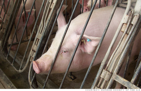McDonald's said it will phase out pig farmers who use sow gestation stalls, which the Humane Society of the U.S. likens to
