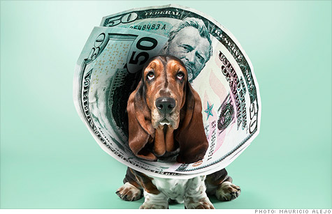 pet care costs, vet care