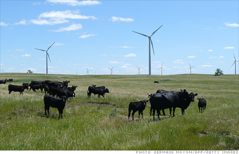Cows graze in the shadow of the Wilton Wind Energy Center near Wilton, North Dakota.