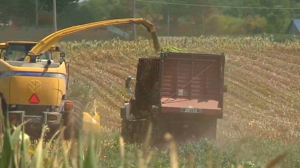 Drought destroys Iowa corn crops