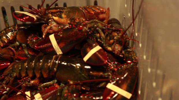Why lobster is so cheap