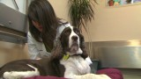 Best Jobs: Dog acupuncture and massages