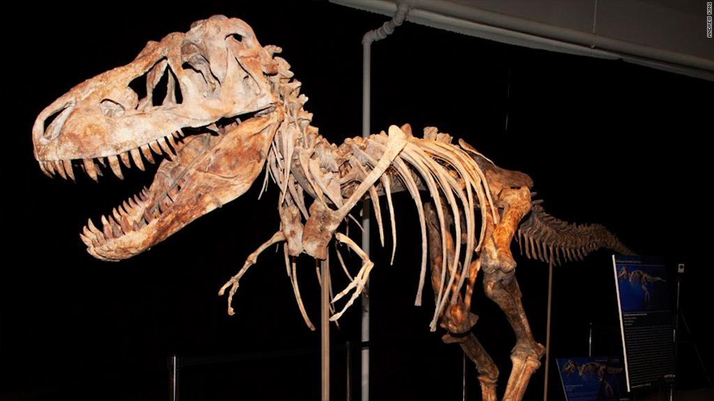 dinosaur tyrannosaurus bataar