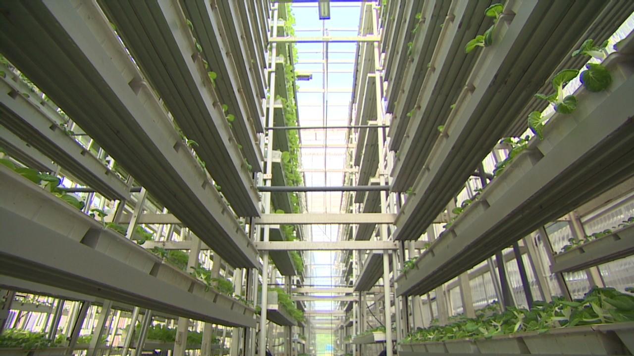 Vertical Farms Solve Land Problem Video Technology
