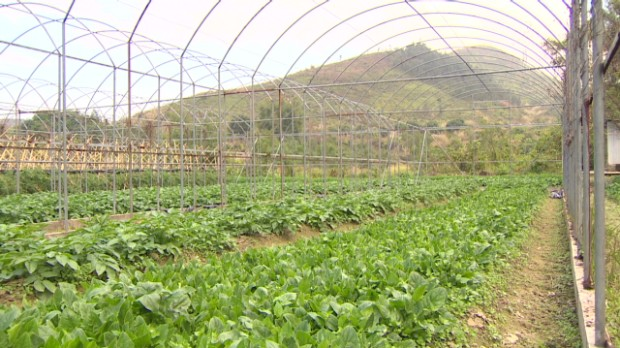 Hong Kong's growing appetite for organic