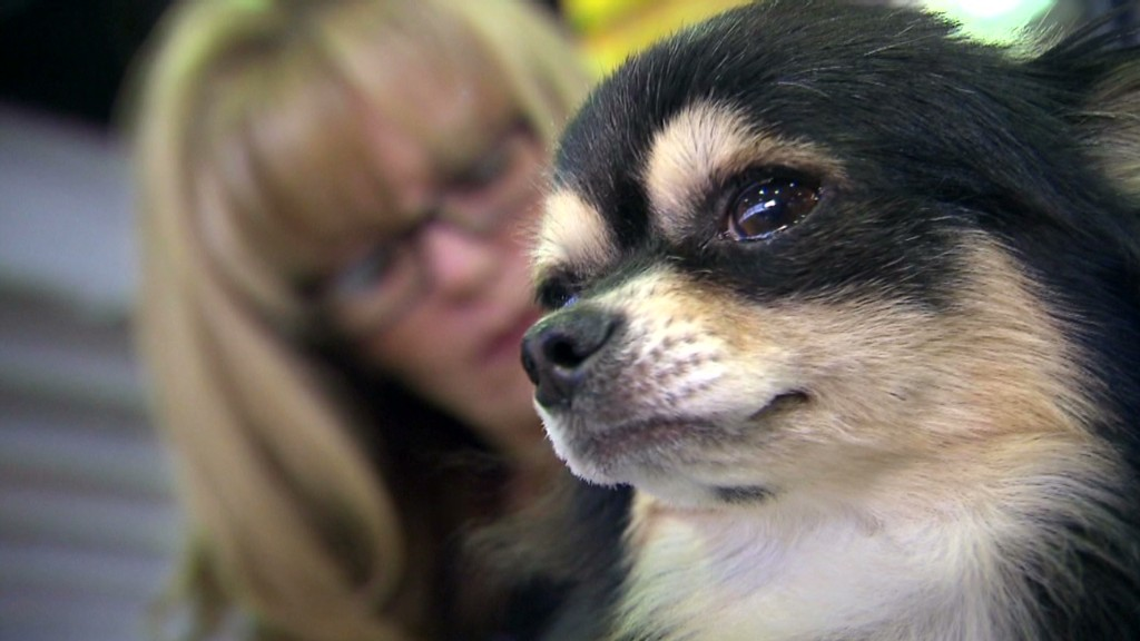 Dogs rack up big bills for 'best in show'