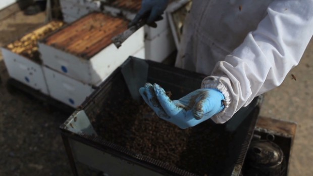 The $3 billion industry powered by bees