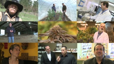 The many faces of legal marijuana