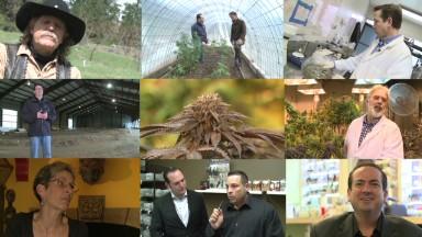 The many faces of legal marijuana