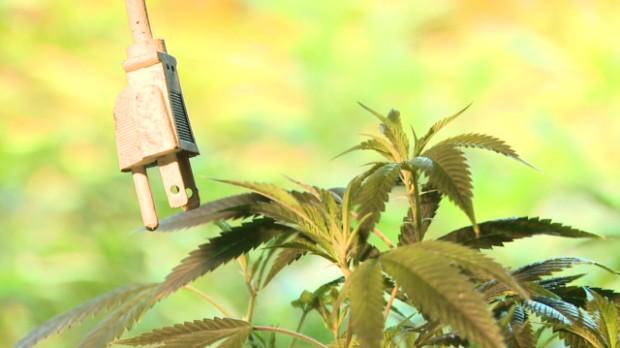 Indoor pot growing uses 1% of U.S. power