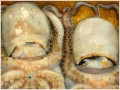 Most outrageous tax cheats