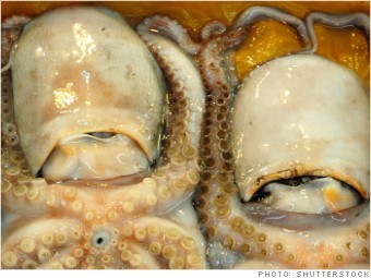 tax cheats octopus box