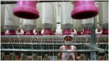 China factory activity falls 