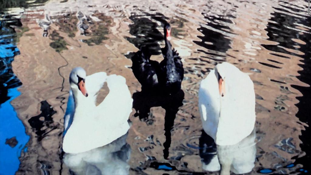 white black swans