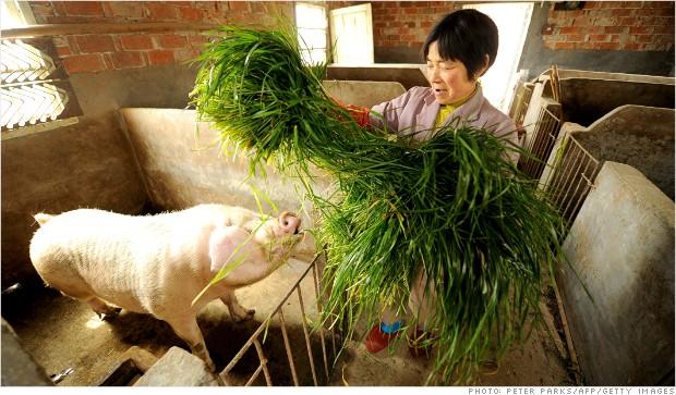Реструктуризация свиной промышленности Китая: Кто выращивает китайских свиней?