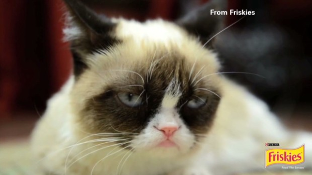 Grumpy Cat gets Hollywood movie deal