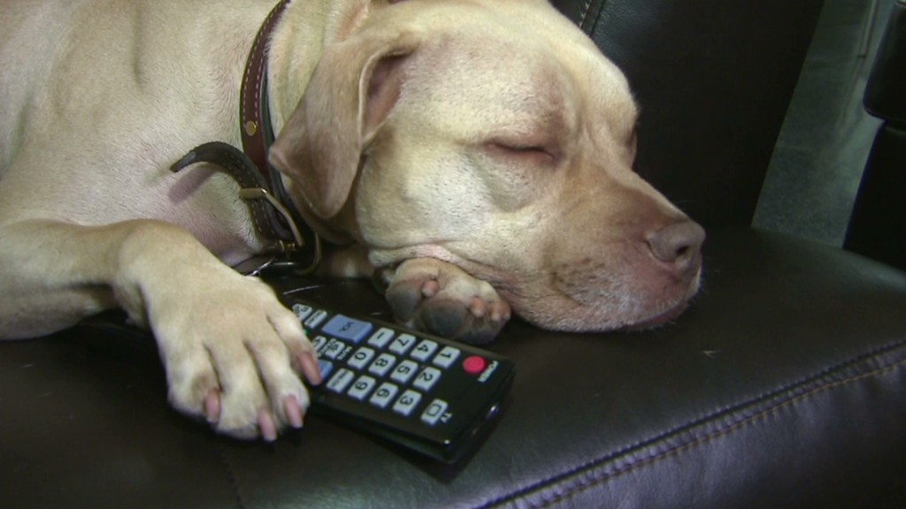 DirecTV launches TV network for dogs