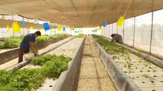 Farming in the Egyptian desert