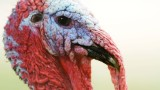 The biggest turkeys of 2013