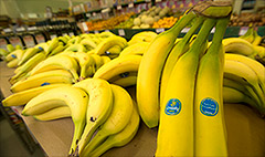 Merger to make Chiquita world's biggest banana company