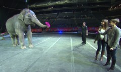 Keeping this 150-year-old circus running
